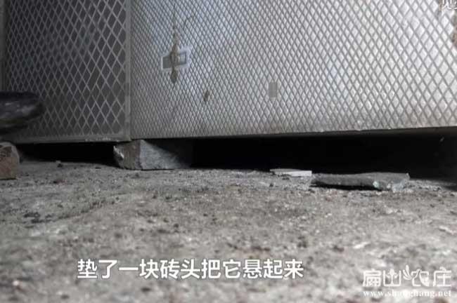 竹鼠常用腹泻药