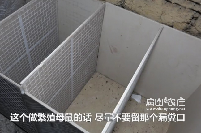 简单竹鼠瓷砖养殖池