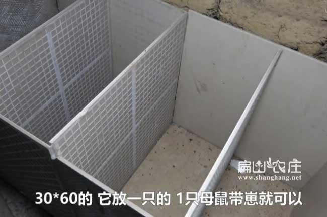 衡阳竹鼠养殖池子的建造