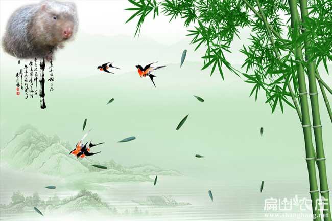 长沙竹子种植