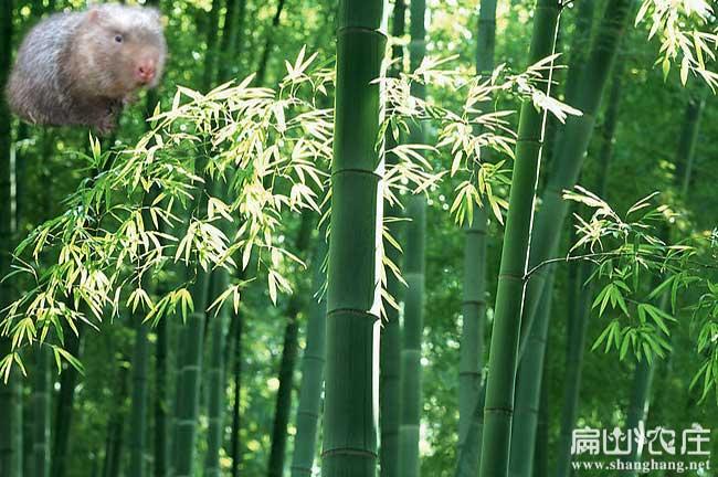 竹林种植技术交流