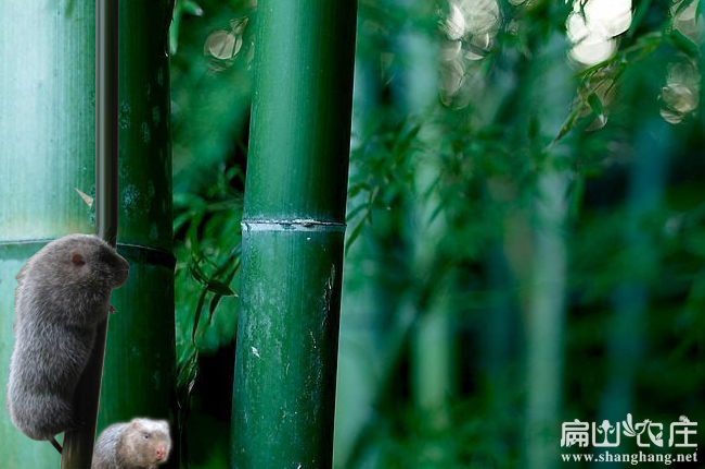 钟山最大的竹鼠养殖合作社