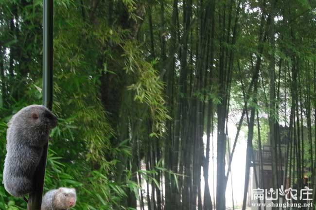 竹鼠中草药竹子
