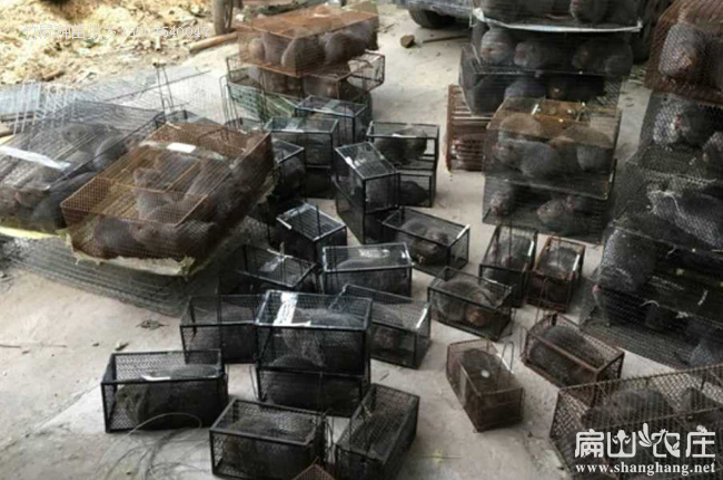 河南最大中兔子养殖场