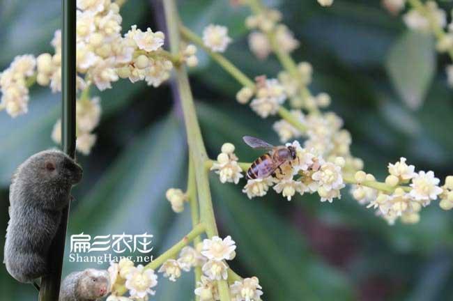 宁德蜜蜂养殖合作社