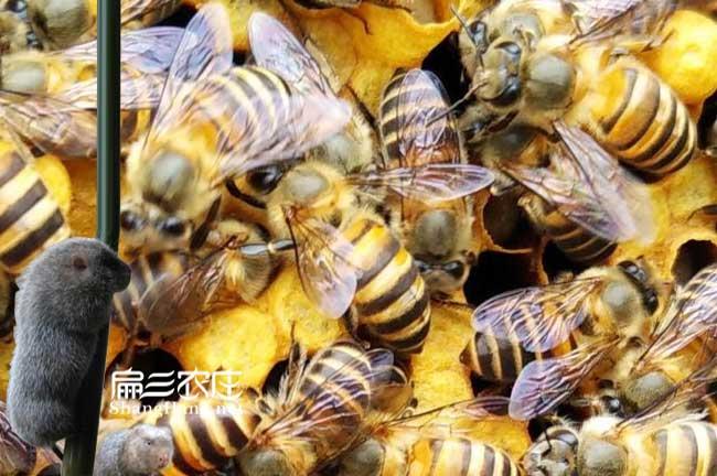 福建蜜蜂养殖基地