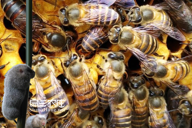 周宁蜂蜜多少钱一斤