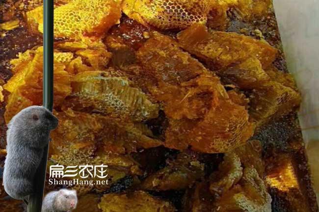 柘荣蜜蜂养殖基地