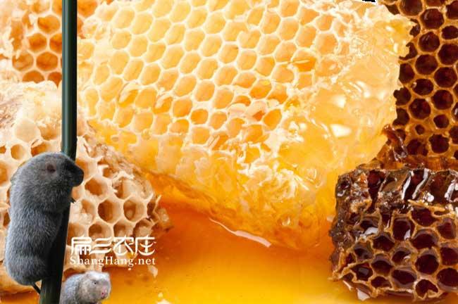 武夷山蜂蜜批发