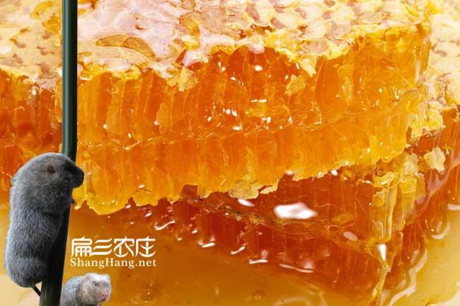 永定蜂蜜价格