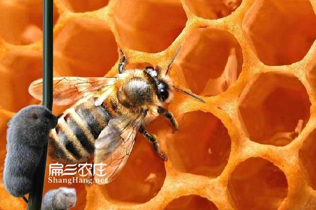 福建扁三农庄蜜蜂基地