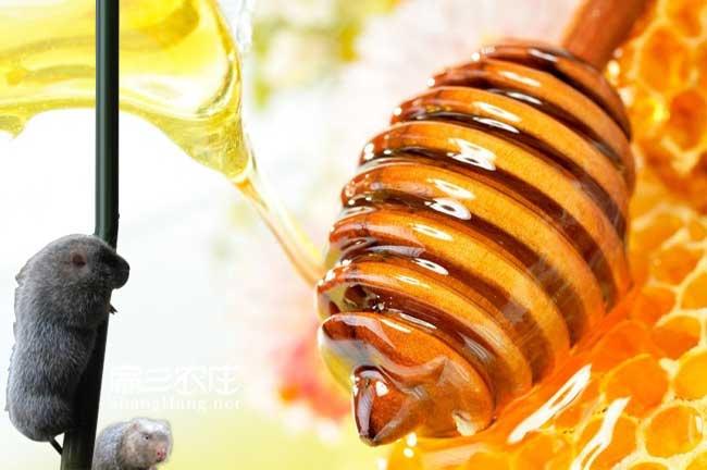 永定蜂蜜养殖合作社