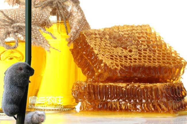 霞浦蜜蜂养殖基地
