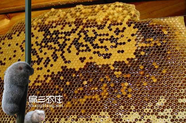 仙桃蜂巢蜜批发