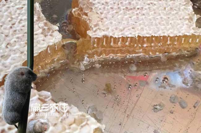 漳州蜜蜂养殖基地