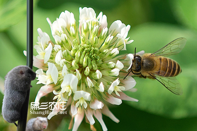福州蜜蜂养殖基地