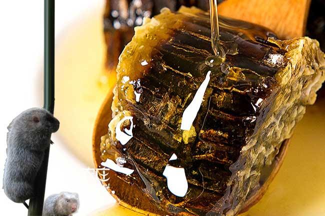 潜江蜜蜂养殖