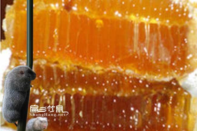 安徽蜜蜂养殖基地