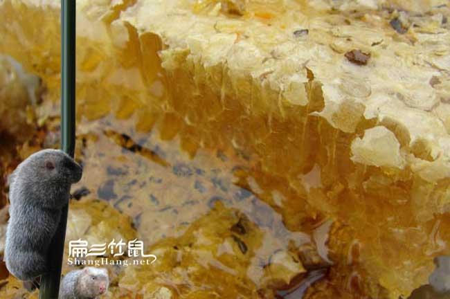 湖北养殖蜜蜂