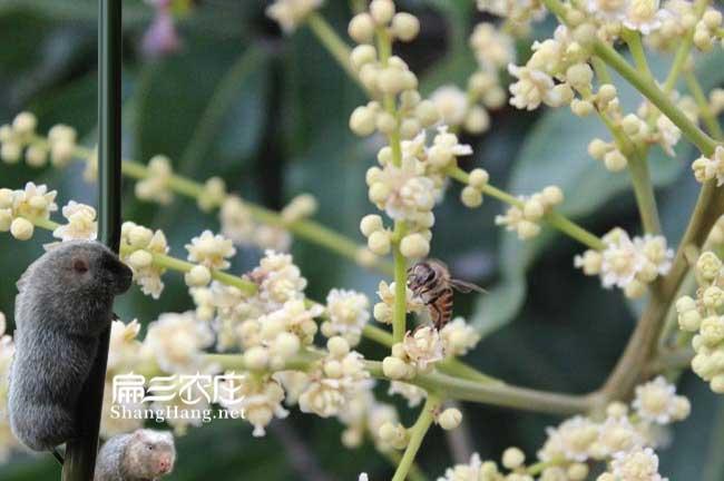 滁州蜜蜂养殖