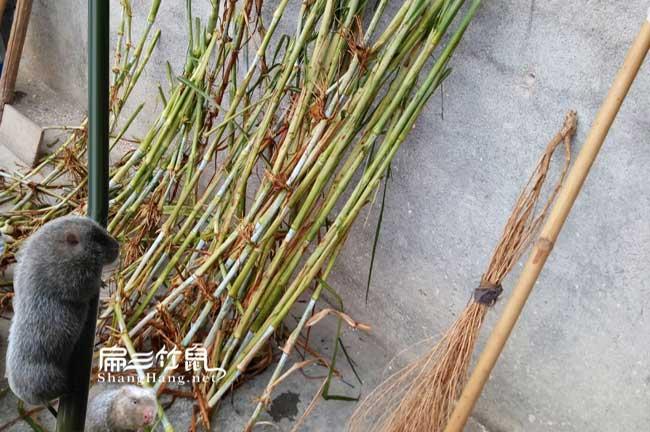 竹鼠养殖技术远程培训