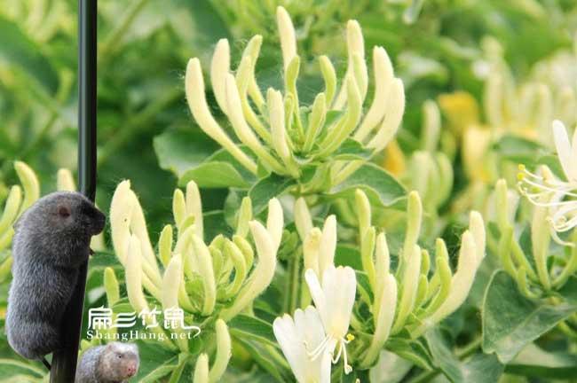 长汀蜜蜂养殖技术培训