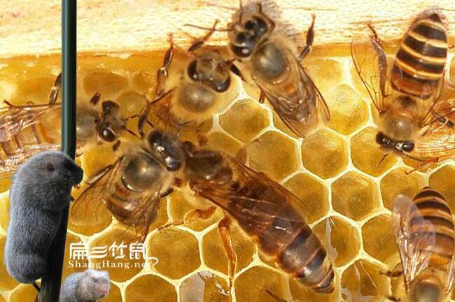 周宁蜂蜜价格