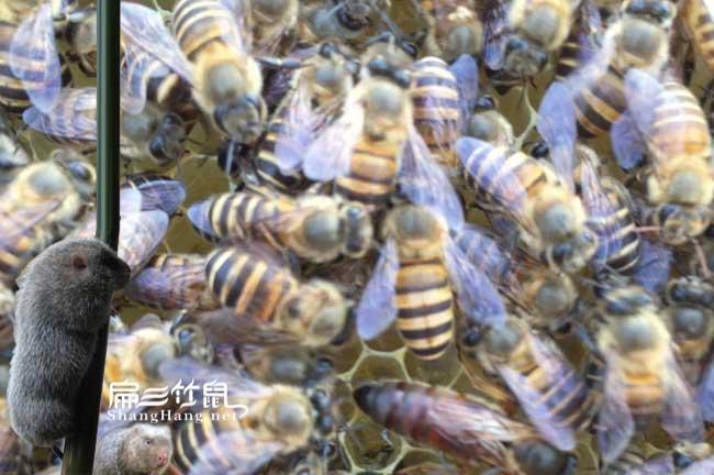 柘荣蜂蜜批发