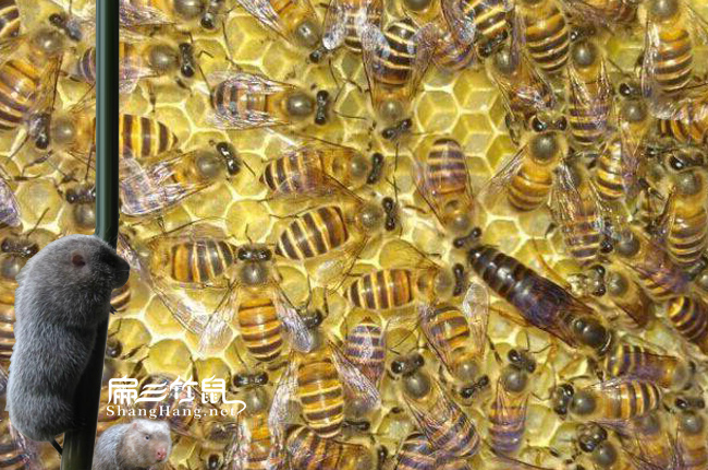 福建蜂蜜养殖合作社