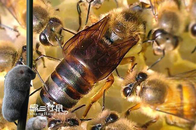 宁德蜂蜜批发价格