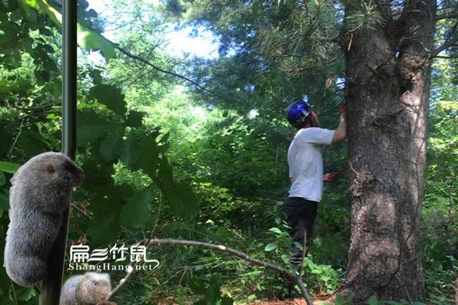 南宁松树种植基地