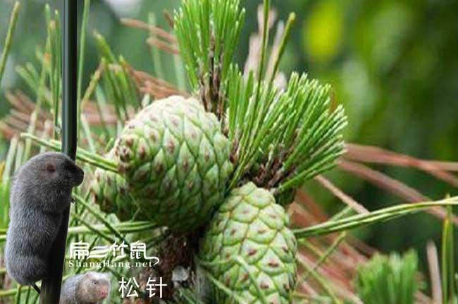 中国cctv竹鼠养殖致富
