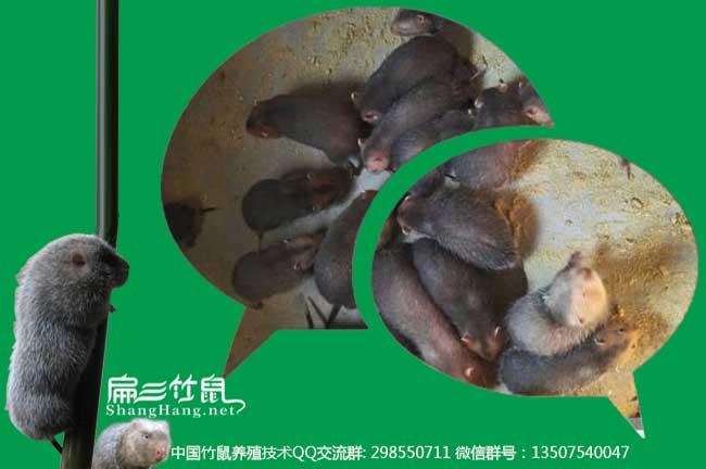 贵州竹鼠微信群
