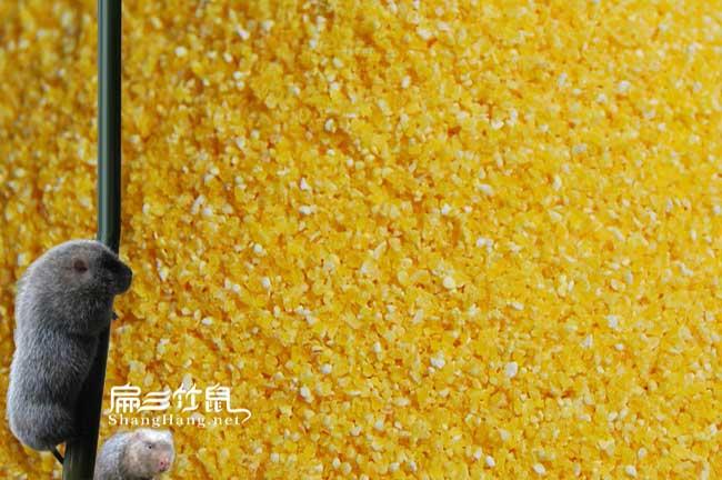 广西玉米粉批发基地