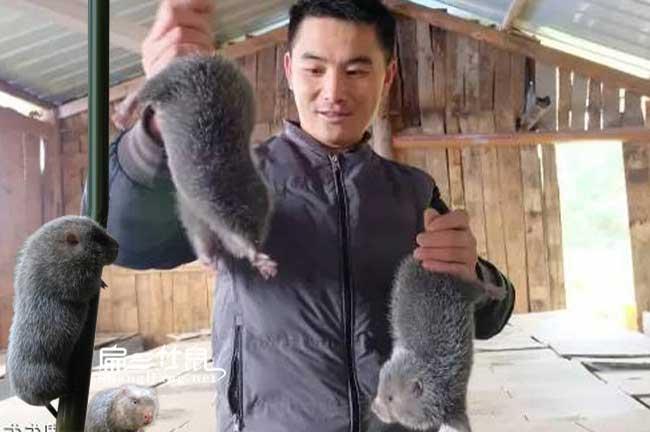 广东竹鼠市场
