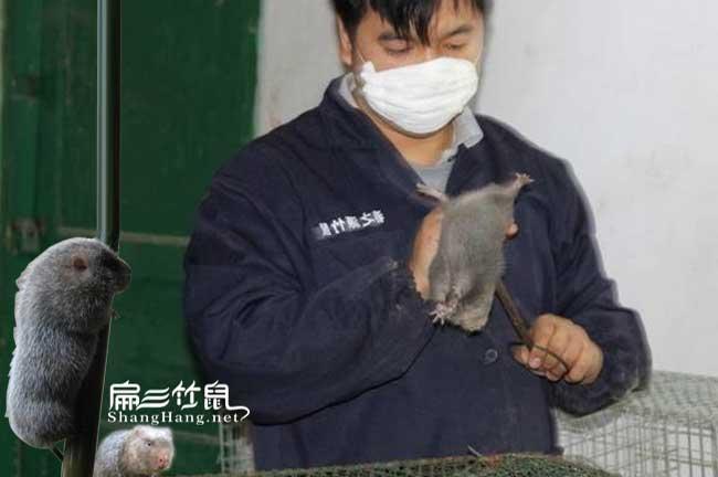 农村竹鼠养殖创业龙义春