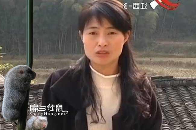 农村竹鼠养殖创业周黄金