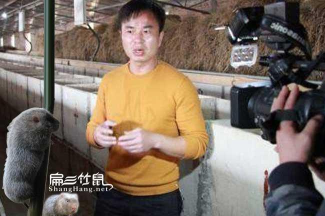 农村竹鼠养殖创业赵海清