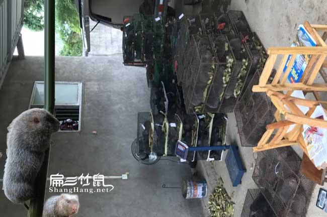 广西竹鼠养殖培训