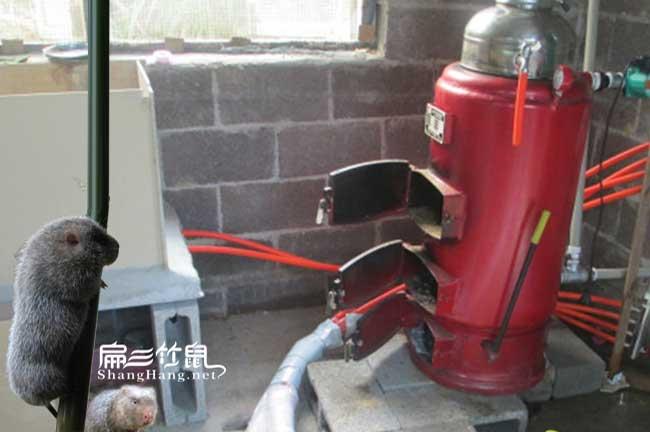竹鼠养殖加温方法