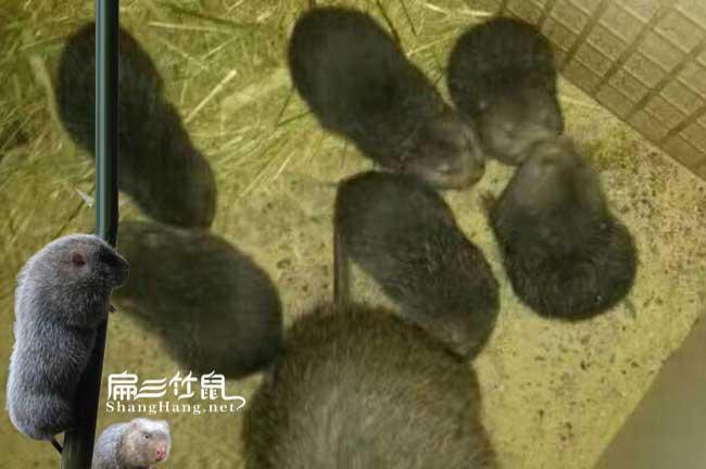 中国最大的竹鼠养殖基地