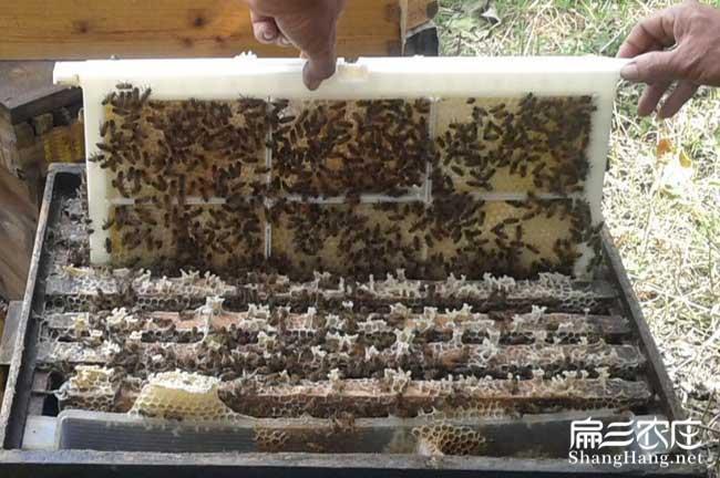 绵阳蜜蜂养殖技术培训