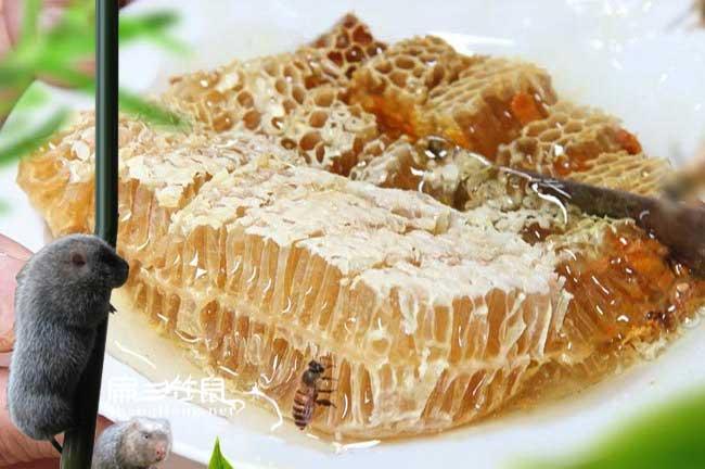 宁蜜蜂养殖