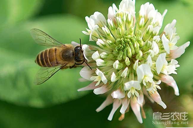 重庆蜜蜂养殖技术