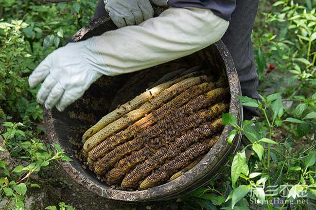 成都野生蜂蜜