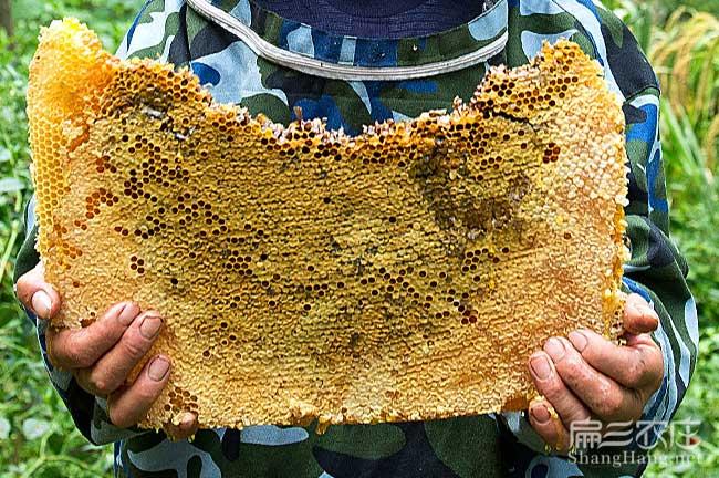 惠州蜂巢蜜批发