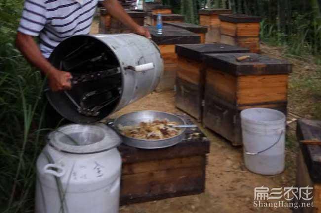 龙岩蜜蜂养殖技术培训