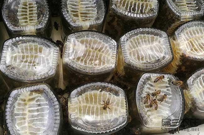 铜川蜂巢蜜批发