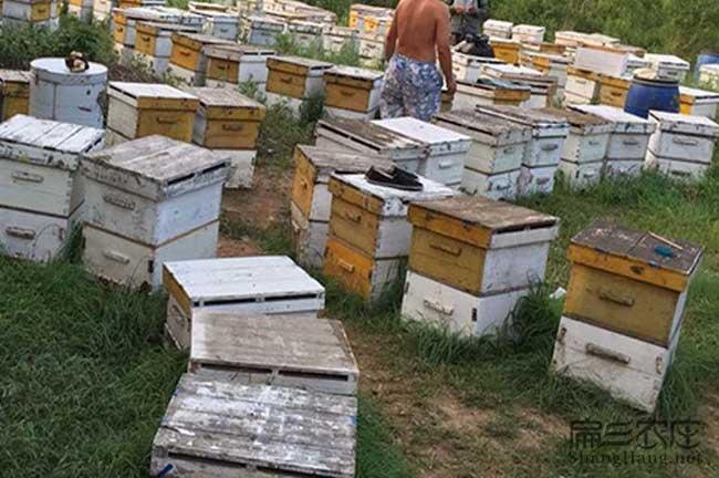 铜川蜜蜂养殖技术培训