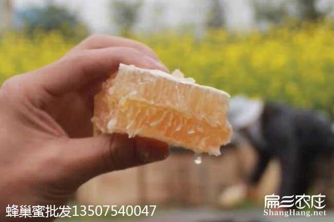 成都蜜蜂养殖技术培训